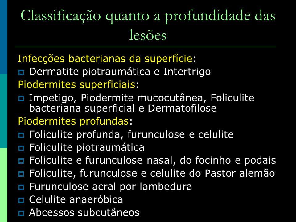 Classificação quanto a profundidade das lesões Infecções bacterianas da superfície: Dermatite piotraumática e Intertrigo Piodermites superficiais: Imp