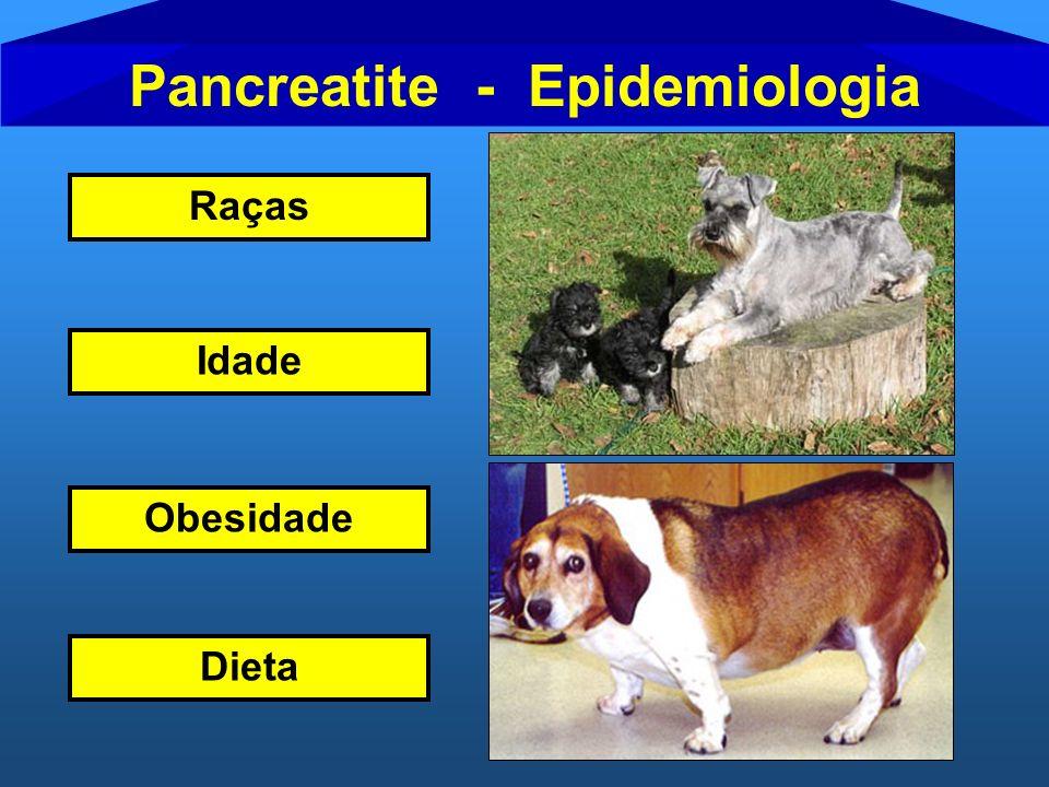 Pancreatite - Epidemiologia Raças Idade Dieta Obesidade