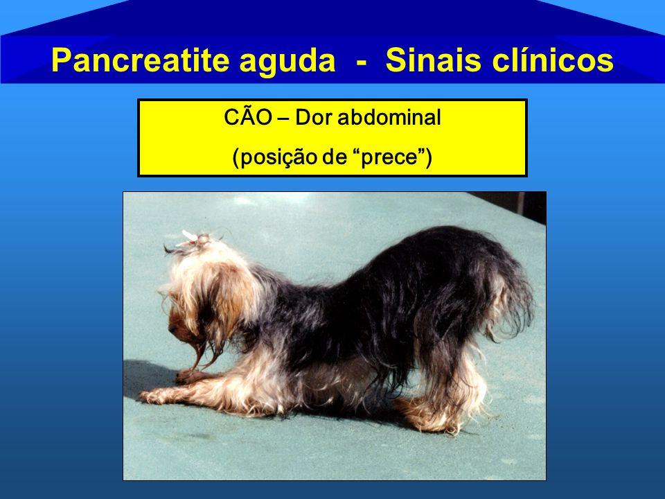 Pancreatite aguda - Sinais clínicos CÃO – Dor abdominal (posição de prece)