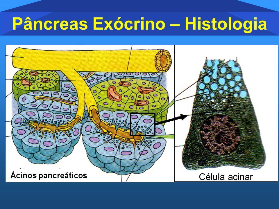 Pâncreas Exócrino – Histologia Célula acinar Ácinos pancreáticos