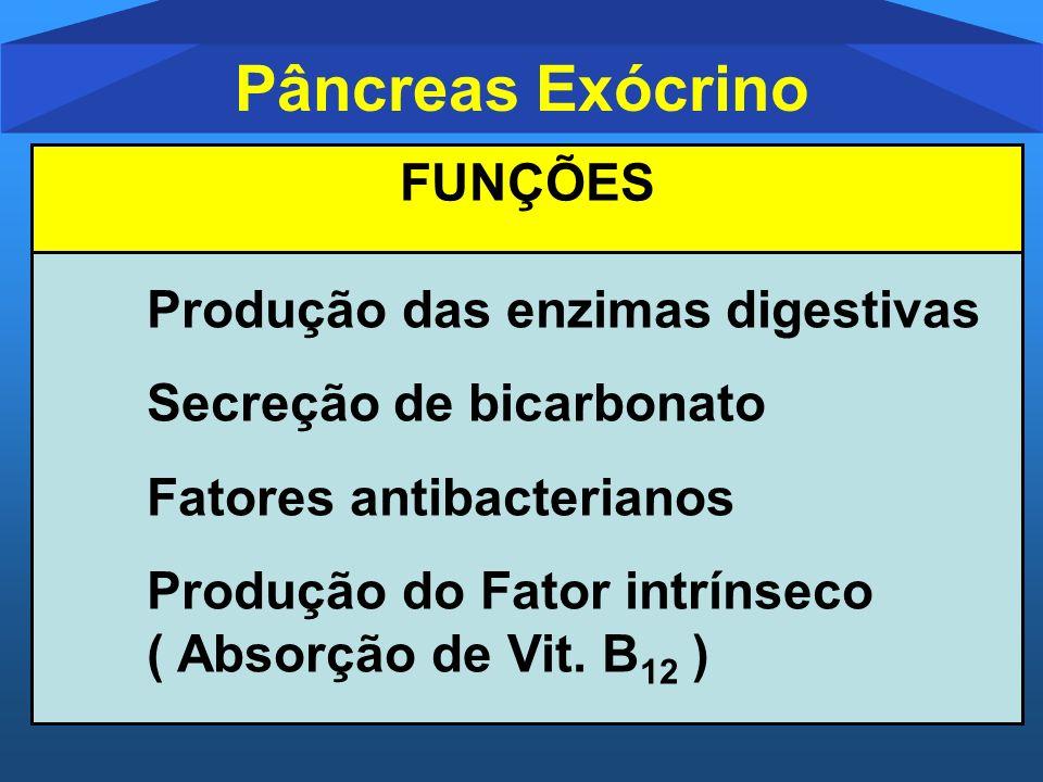 Pâncreas Exócrino Produção das enzimas digestivas Secreção de bicarbonato Fatores antibacterianos Produção do Fator intrínseco ( Absorção de Vit. B 12