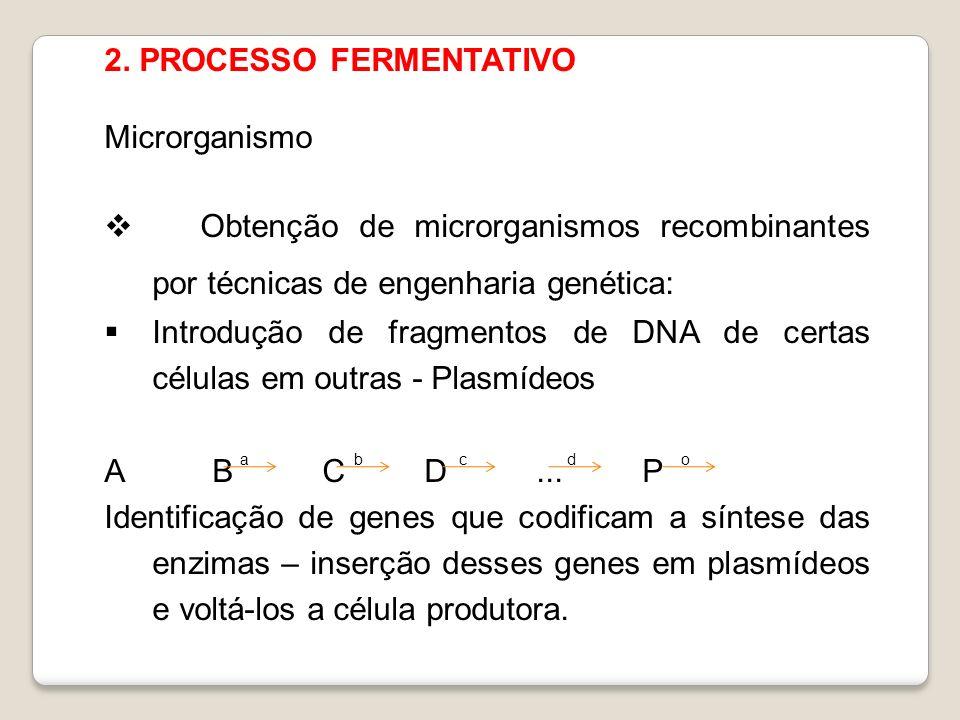 2. PROCESSO FERMENTATIVO Microrganismo Obtenção de microrganismos recombinantes por técnicas de engenharia genética: Introdução de fragmentos de DNA d