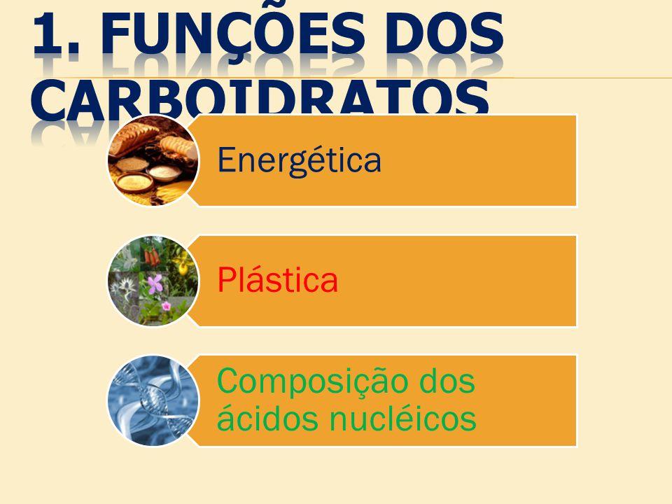 Energética Plástica Composição dos ácidos nucléicos