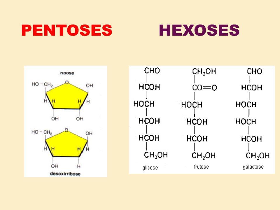 PENTOSESHEXOSES