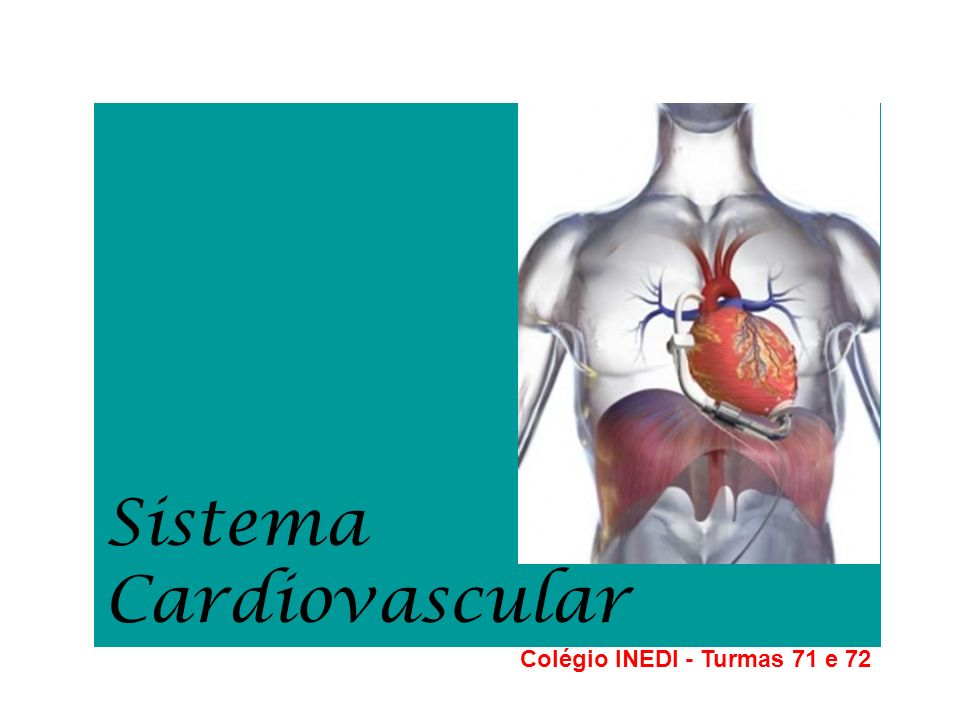 Sistema Cardiovascular Colégio INEDI - Turmas 71 e 72