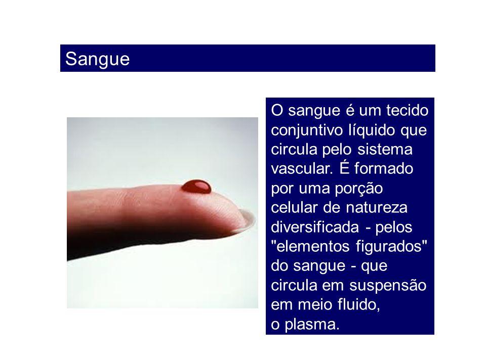 Sangue O sangue é um tecido conjuntivo líquido que circula pelo sistema vascular. É formado por uma porção celular de natureza diversificada - pelos