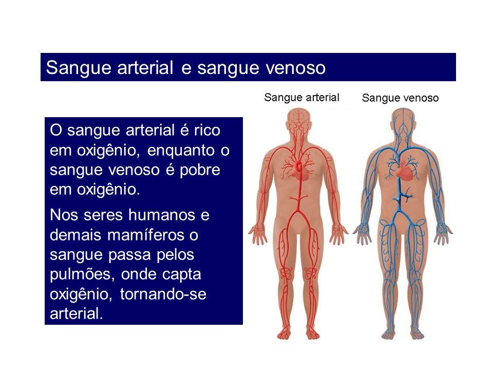 Sangue arterial e sangue venoso O sangue arterial é rico em oxigênio, enquanto o sangue venoso é pobre em oxigênio. Nos seres humanos e demais mamífer