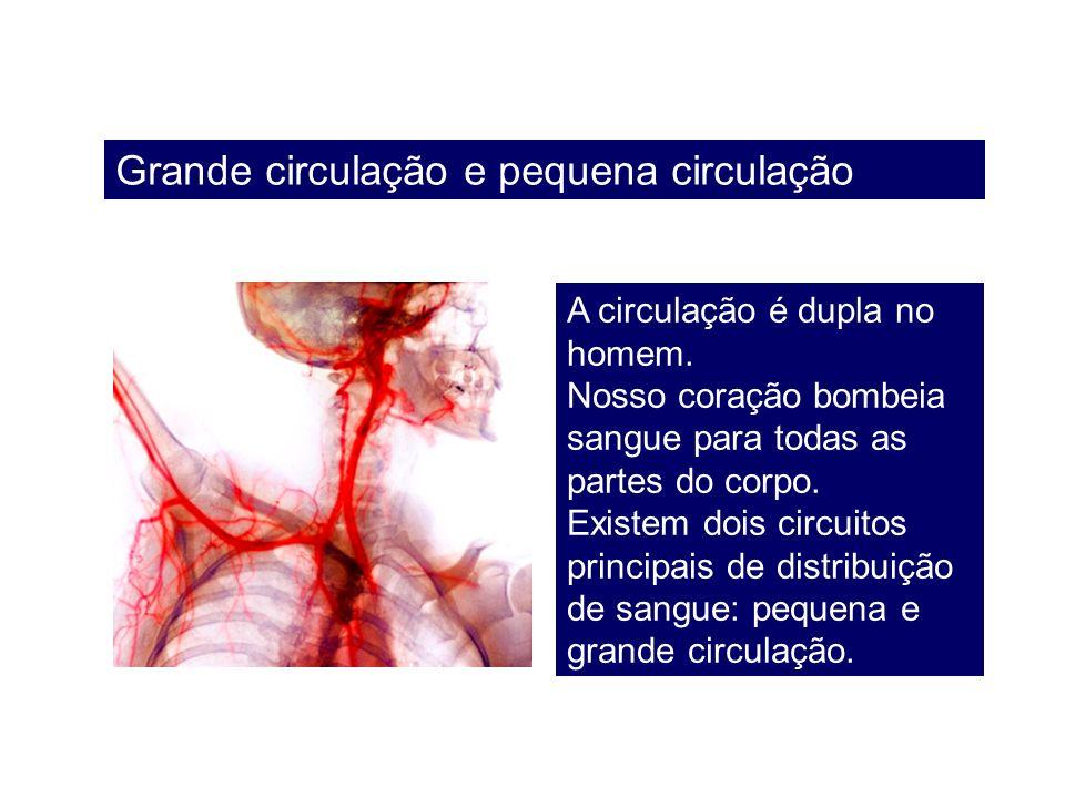 Grande circulação e pequena circulação A circulação é dupla no homem. Nosso coração bombeia sangue para todas as partes do corpo. Existem dois circuit