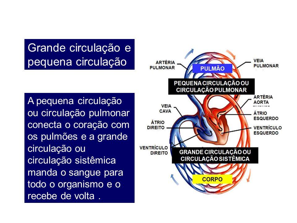 Grande circulação e pequena circulação A pequena circulação ou circulação pulmonar conecta o coração com os pulmões e a grande circulação ou circulaçã