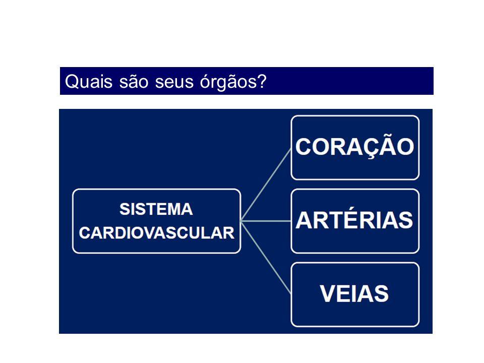 Quais são seus órgãos?
