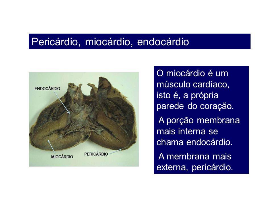Pericárdio, miocárdio, endocárdio O miocárdio é um músculo cardíaco, isto é, a própria parede do coração. A porção membrana mais interna se chama endo