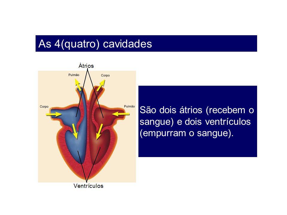 As 4(quatro) cavidades São dois átrios (recebem o sangue) e dois ventrículos (empurram o sangue).