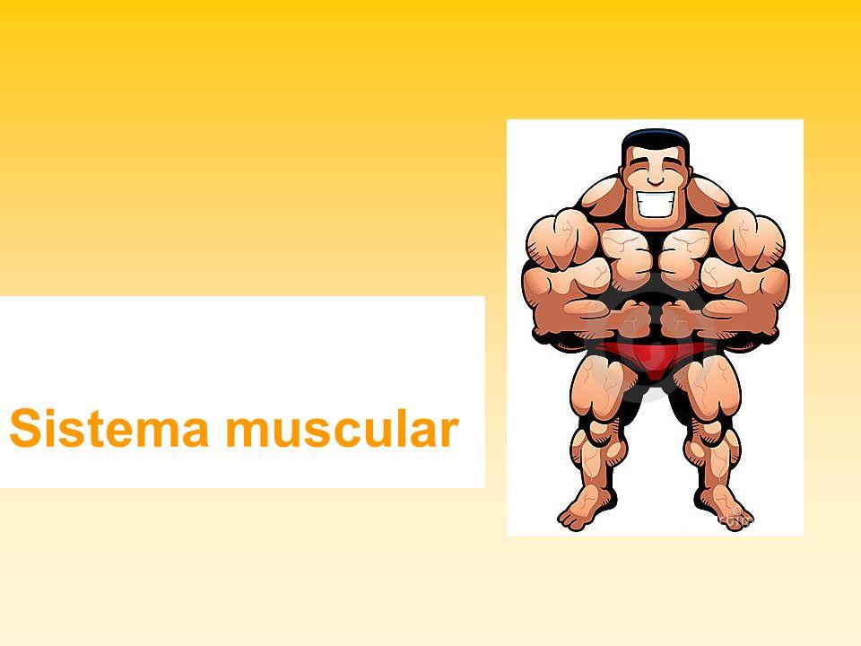 Atenção aos músculos Cicatrizes, deformidades, mutilações são resultados de aplicações de substâncias que prejudicam a saúde e são impróprias para o consumo humano.
