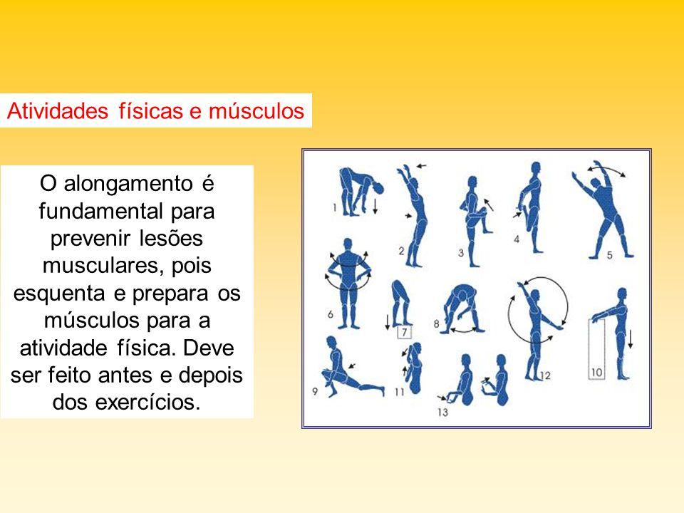 Atividades físicas e músculos O alongamento é fundamental para prevenir lesões musculares, pois esquenta e prepara os músculos para a atividade física