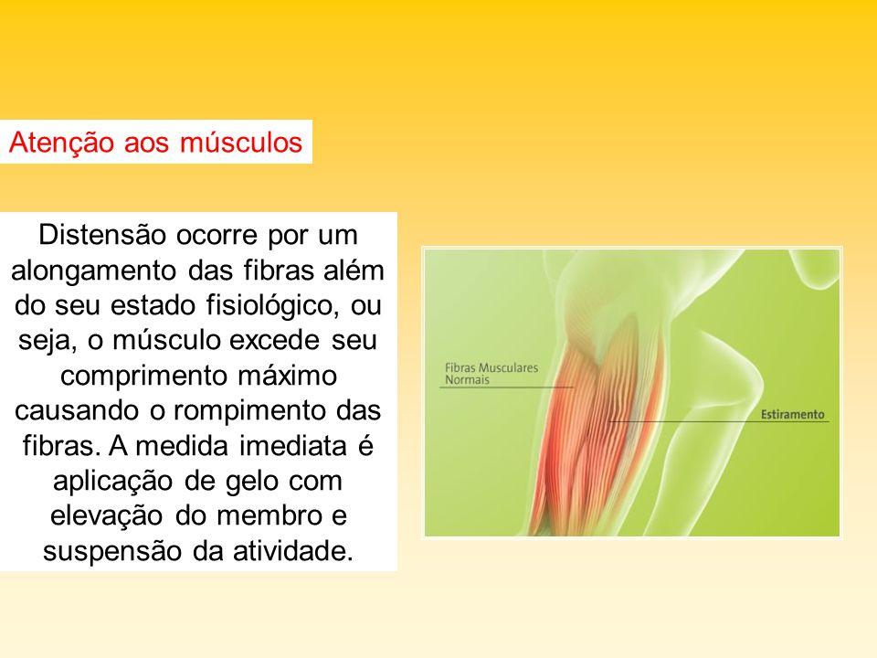 Atenção aos músculos Distensão ocorre por um alongamento das fibras além do seu estado fisiológico, ou seja, o músculo excede seu comprimento máximo c