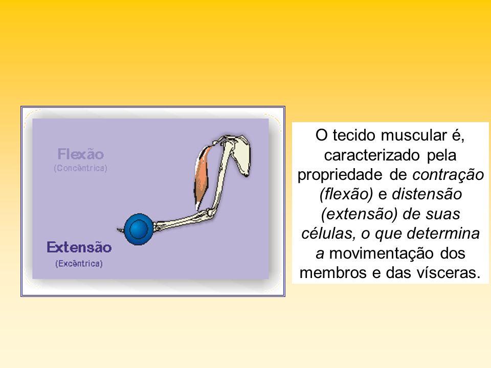 As chamadas células musculares especializaram- se para a contração e o relaxamento.
