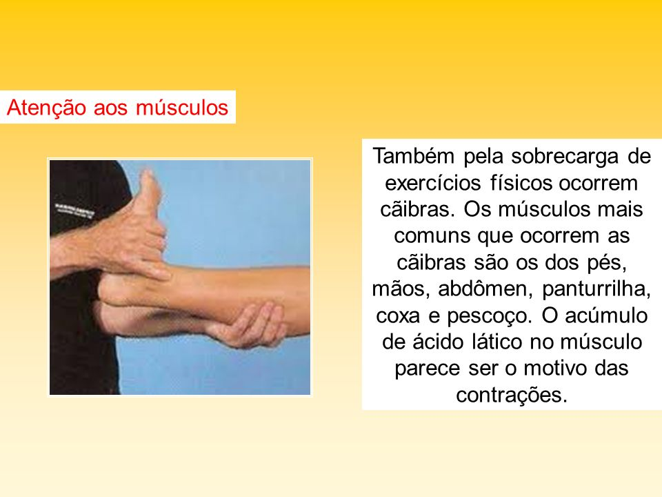 Atenção aos músculos Também pela sobrecarga de exercícios físicos ocorrem cãibras. Os músculos mais comuns que ocorrem as cãibras são os dos pés, mãos