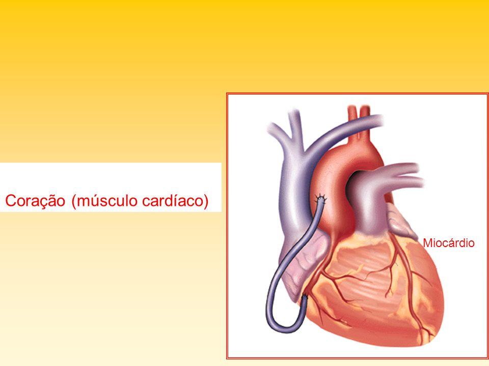 Coração (músculo cardíaco) Miocárdio