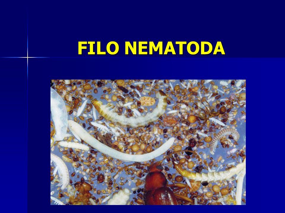 FILO NEMATODA