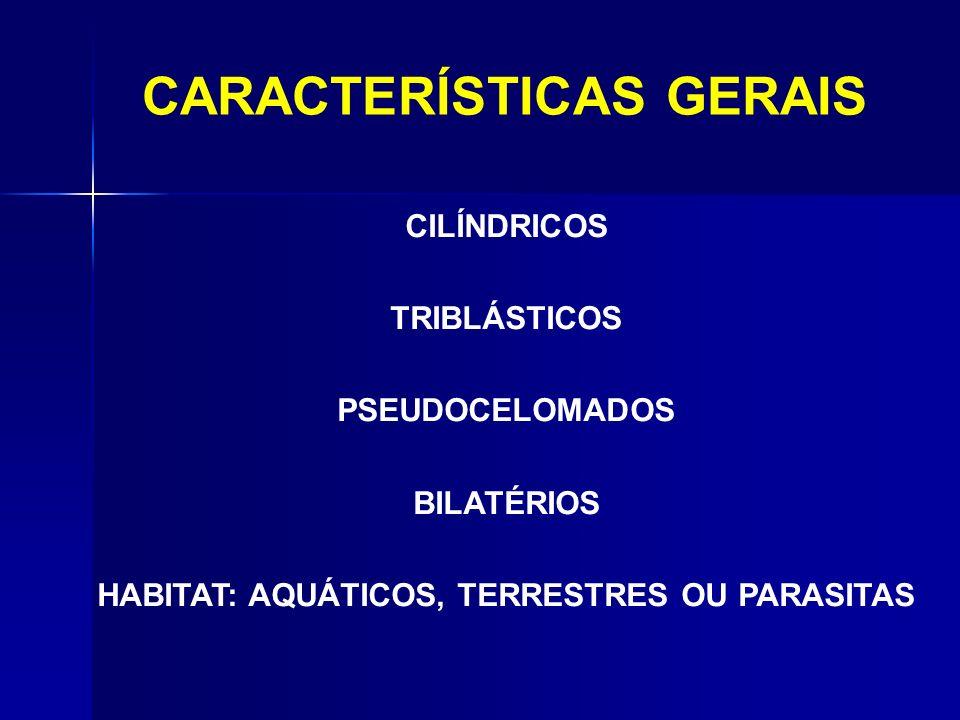CARACTERÍSTICAS GERAIS CILÍNDRICOS TRIBLÁSTICOS PSEUDOCELOMADOS BILATÉRIOS HABITAT: AQUÁTICOS, TERRESTRES OU PARASITAS