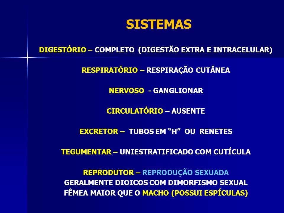 DIGESTÓRIO – COMPLETO (DIGESTÃO EXTRA E INTRACELULAR) RESPIRATÓRIO – RESPIRAÇÃO CUTÂNEA NERVOSO - GANGLIONAR CIRCULATÓRIO – AUSENTE EXCRETOR – TUBOS EM H OU RENETES TEGUMENTAR – UNIESTRATIFICADO COM CUTÍCULA REPRODUTOR – REPRODUÇÃO SEXUADA GERALMENTE DIOICOS COM DIMORFISMO SEXUAL FÊMEA MAIOR QUE O MACHO (POSSUI ESPÍCULAS) SISTEMAS