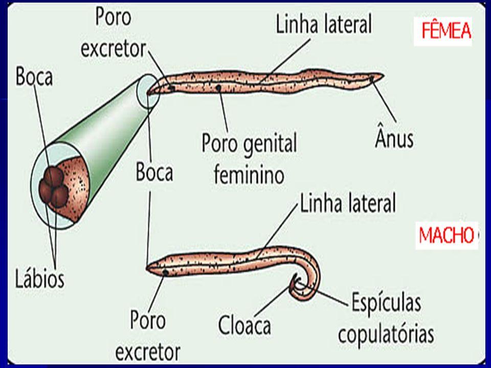 Ancylostoma duodenale Necator americanus