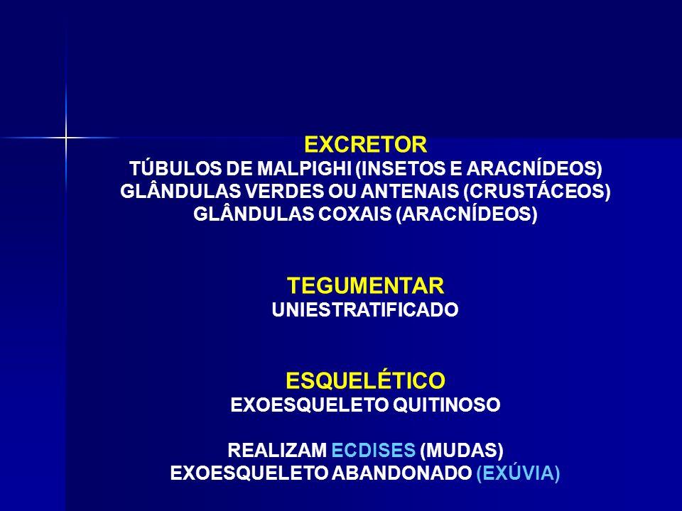 DIGESTÓRIO COMPLETO (EXTRACELULAR) ARACNÍDEOS (EXTRACORPÓREA) RESPIRATÓRIO TRAQUEAL (INSETOS – QUILÓPODES – DIPLÓPODES) FILOTRAQUEL (ARACNÍDEOS) BRANQ