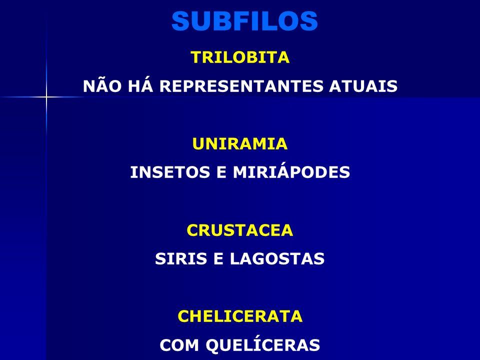 EXCRETOR TÚBULOS DE MALPIGHI (INSETOS E ARACNÍDEOS) GLÂNDULAS VERDES OU ANTENAIS (CRUSTÁCEOS) GLÂNDULAS COXAIS (ARACNÍDEOS) TEGUMENTAR UNIESTRATIFICAD