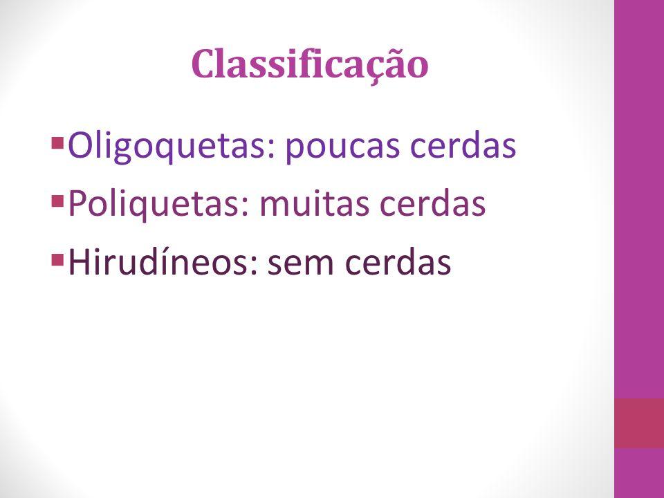 Oligoquetas