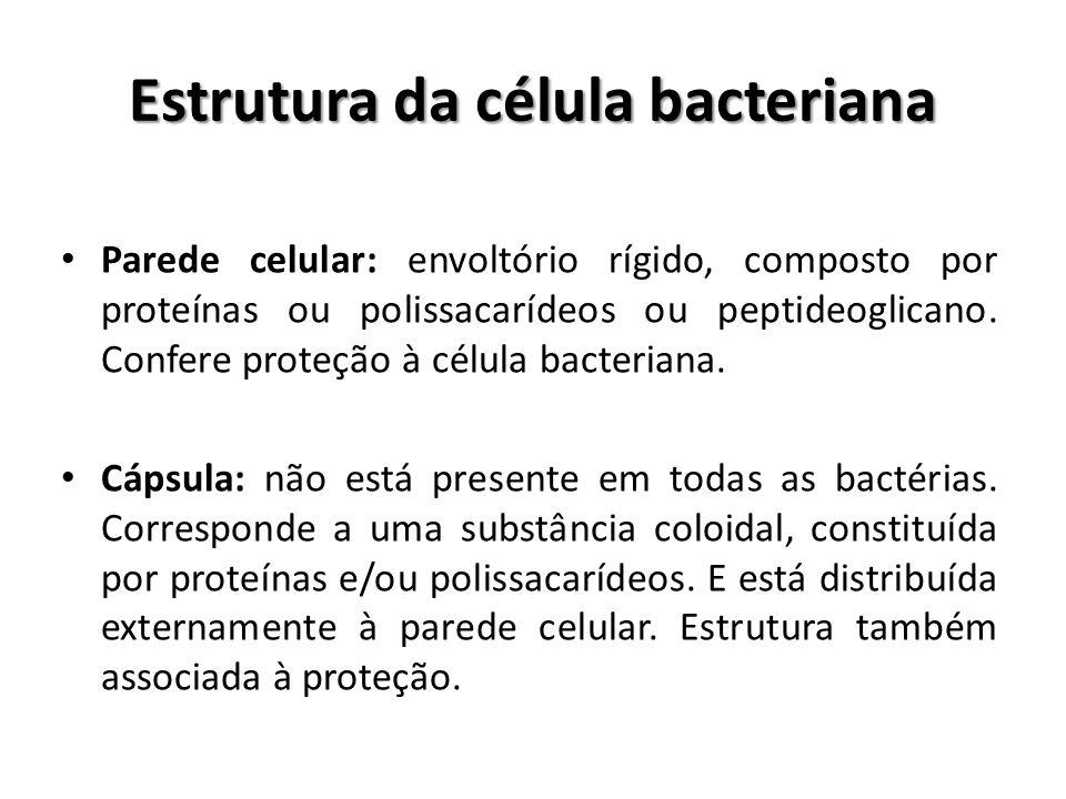 Parede celular: envoltório rígido, composto por proteínas ou polissacarídeos ou peptideoglicano. Confere proteção à célula bacteriana. Cápsula: não es