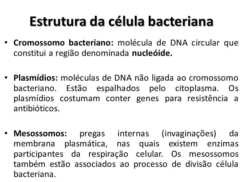 Cromossomo bacteriano: molécula de DNA circular que constitui a região denominada nucleóide. Plasmídios: moléculas de DNA não ligada ao cromossomo bac