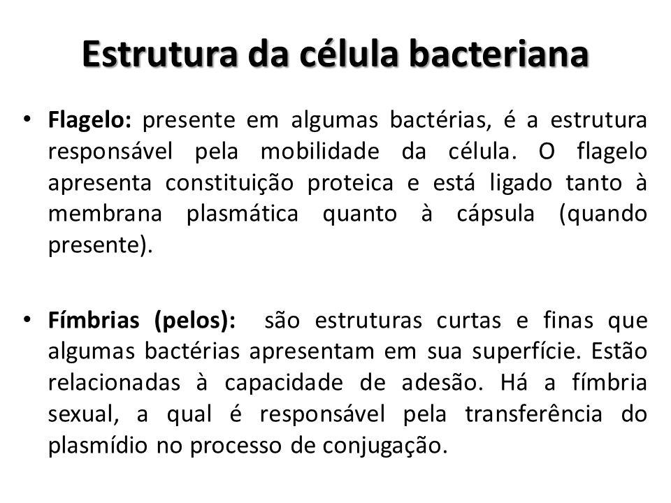 Flagelo: presente em algumas bactérias, é a estrutura responsável pela mobilidade da célula. O flagelo apresenta constituição proteica e está ligado t