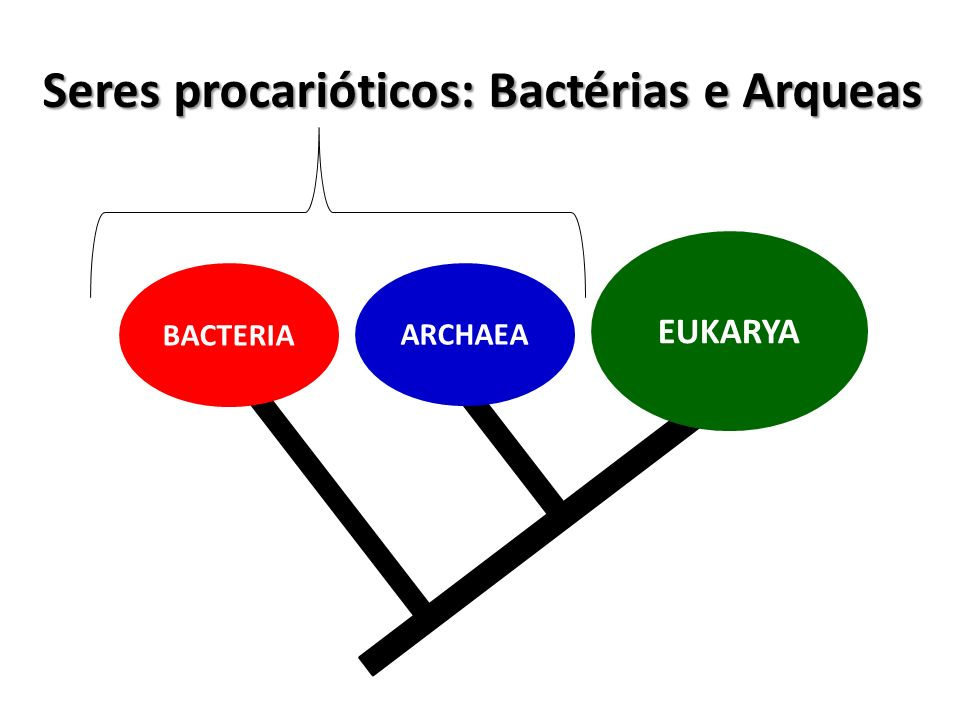 Seres procarióticos: Bactérias e Arqueas EUKARYA ARCHAEA BACTERIA