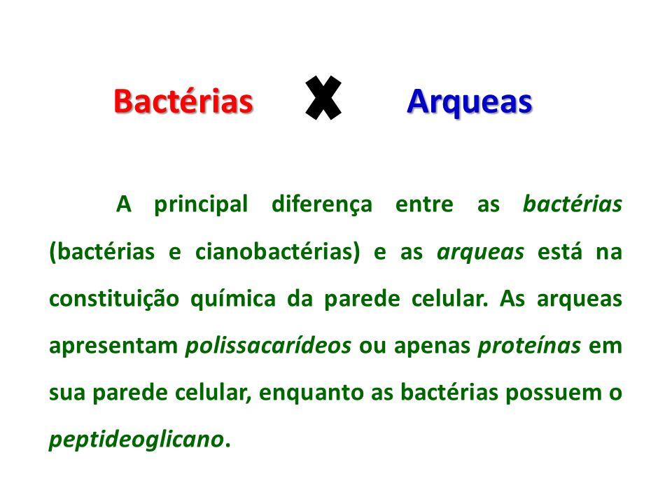 Bactérias Arqueas A principal diferença entre as bactérias (bactérias e cianobactérias) e as arqueas está na constituição química da parede celular. A