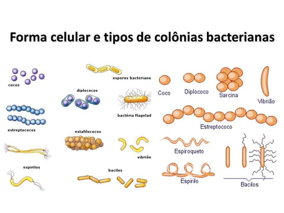 Algumas espécies de bactérias originam, sob certas condições ambientais, estruturas resistentes denominadas esporos.