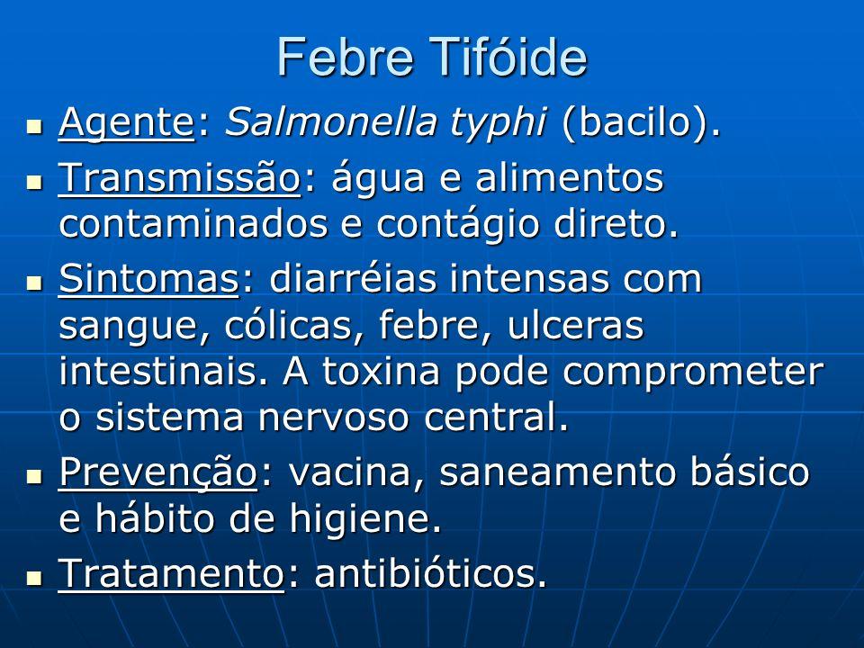 Febre Tifóide Agente: Salmonella typhi (bacilo). Agente: Salmonella typhi (bacilo). Transmissão: água e alimentos contaminados e contágio direto. Tran
