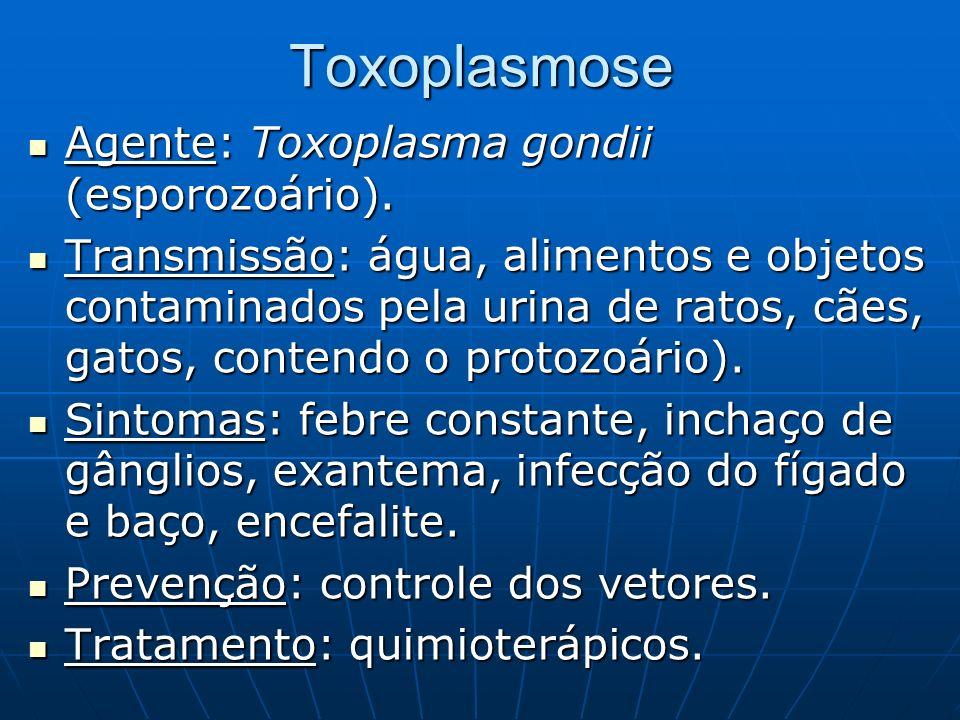 Toxoplasmose Agente: Toxoplasma gondii (esporozoário). Agente: Toxoplasma gondii (esporozoário). Transmissão: água, alimentos e objetos contaminados p
