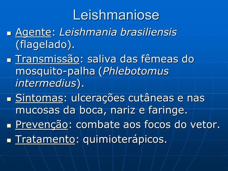 Leishmaniose Agente: Leishmania brasiliensis (flagelado). Agente: Leishmania brasiliensis (flagelado). Transmissão: saliva das fêmeas do mosquito-palh