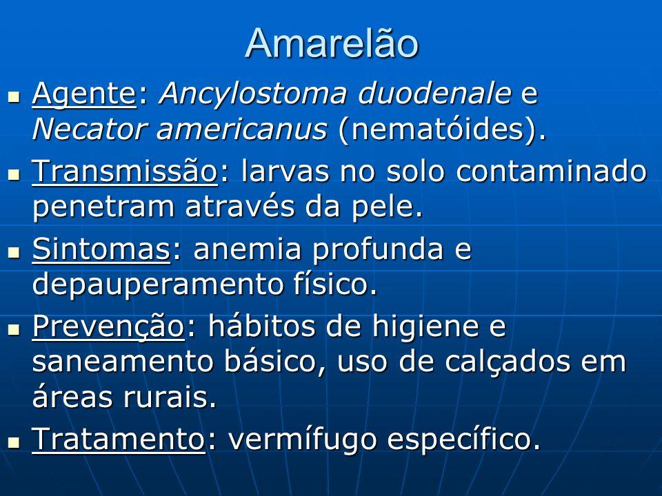 Amarelão Agente: Ancylostoma duodenale e Necator americanus (nematóides). Agente: Ancylostoma duodenale e Necator americanus (nematóides). Transmissão