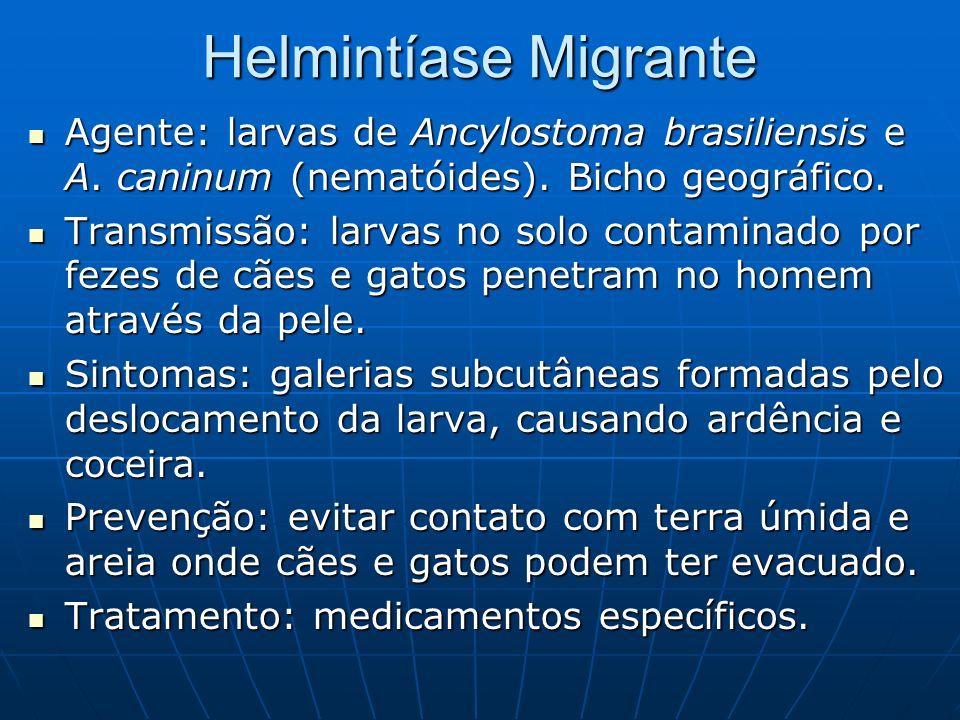 Helmintíase Migrante Agente: larvas de Ancylostoma brasiliensis e A. caninum (nematóides). Bicho geográfico. Agente: larvas de Ancylostoma brasiliensi