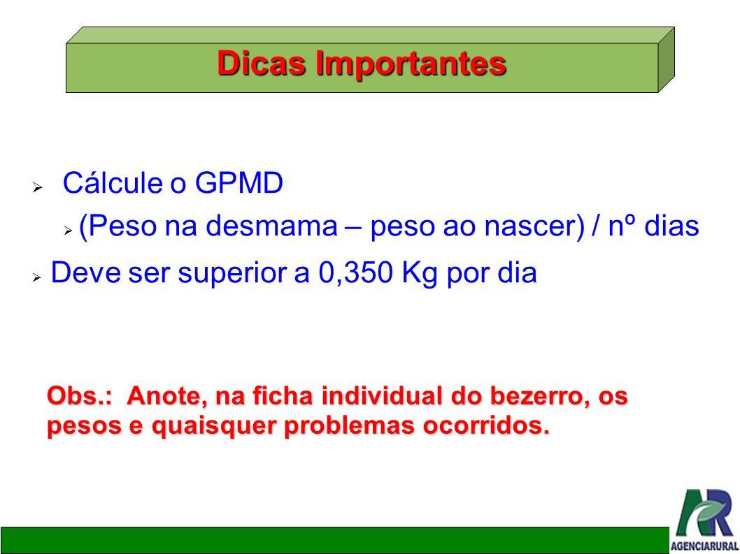 Cálcule o GPMD (Peso na desmama – peso ao nascer) / nº dias Deve ser superior a 0,350 Kg por dia Dicas Importantes Obs.: Anote, na ficha individual do