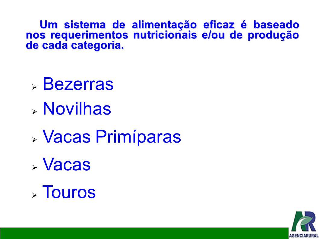 Um sistema de alimentação eficaz é baseado nos requerimentos nutricionais e/ou de produção de cada categoria. Bezerras Novilhas Vacas Primíparas Vacas