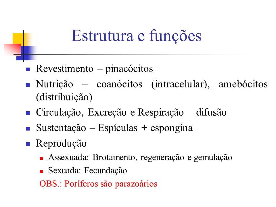 Estrutura e funções Revestimento – pinacócitos Nutrição – coanócitos (intracelular), amebócitos (distribuição) Circulação, Excreção e Respiração – dif
