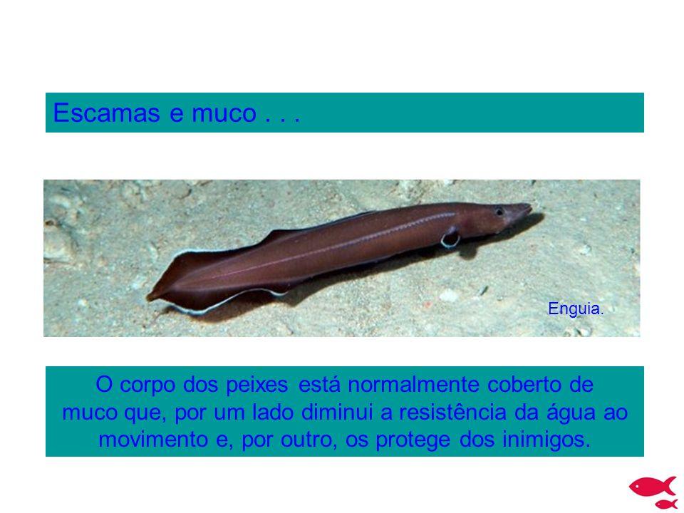 Escamas e muco... O corpo dos peixes está normalmente coberto de muco que, por um lado diminui a resistência da água ao movimento e, por outro, os pro