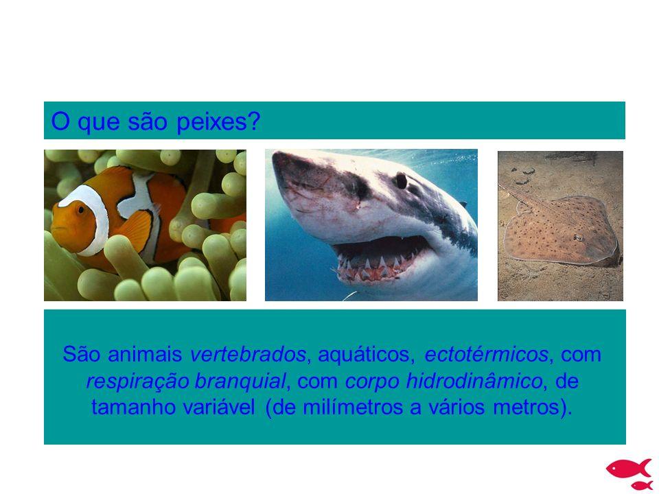 O que são peixes? São animais vertebrados, aquáticos, ectotérmicos, com respiração branquial, com corpo hidrodinâmico, de tamanho variável (de milímet