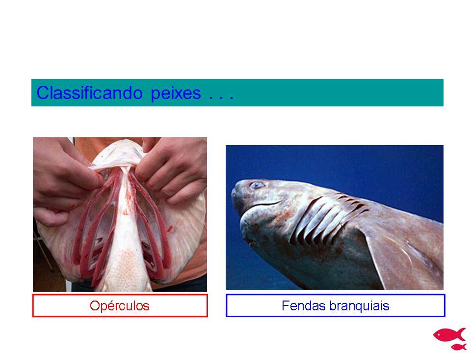 Classificando peixes...