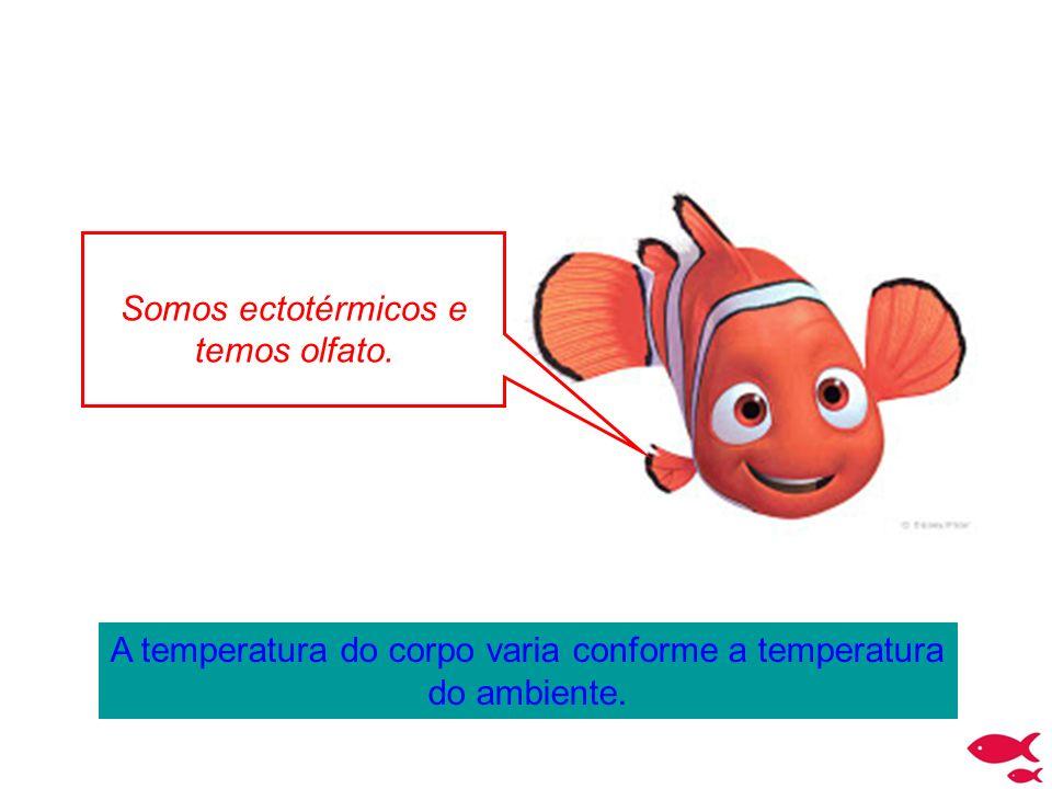 Corpo hidrodinâmico...A forma do corpo (hidrodinâmico) facilita o deslocamento do peixe na água.