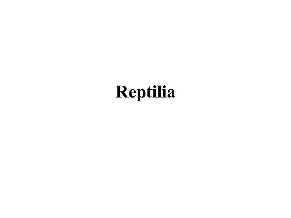 Características dos répteis A respiração dos répteis é pulmonar.