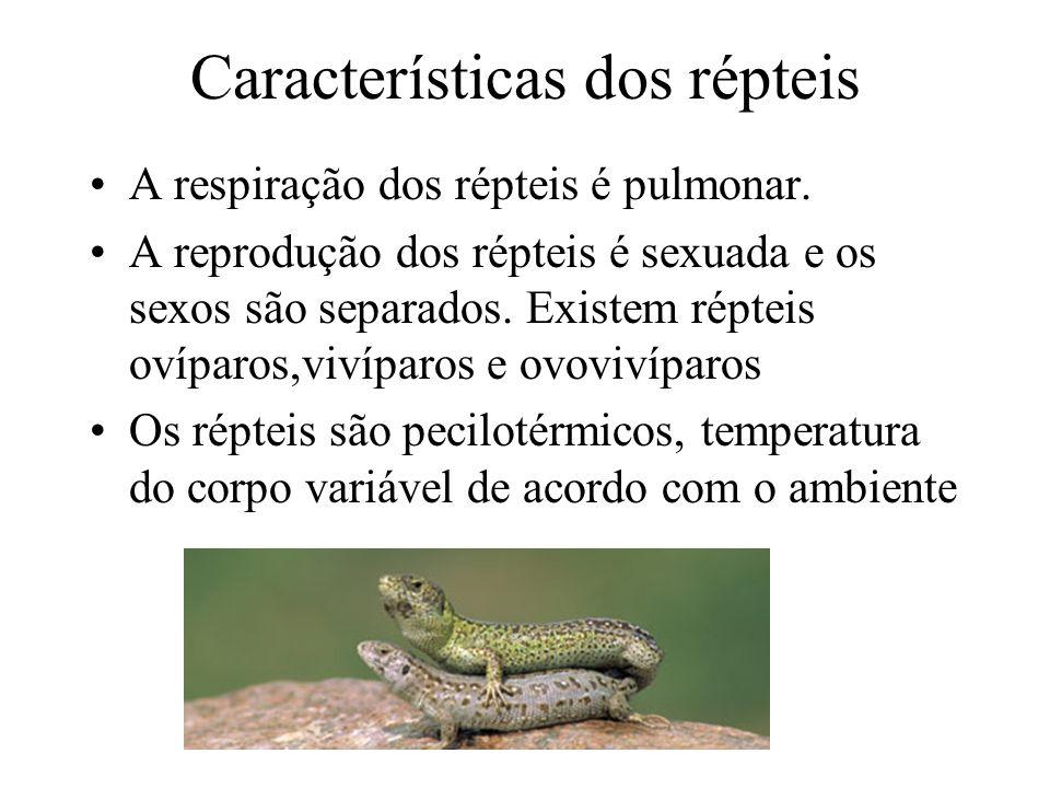 Reprodução Dos Repteis a Reprodução Dos Répteis é
