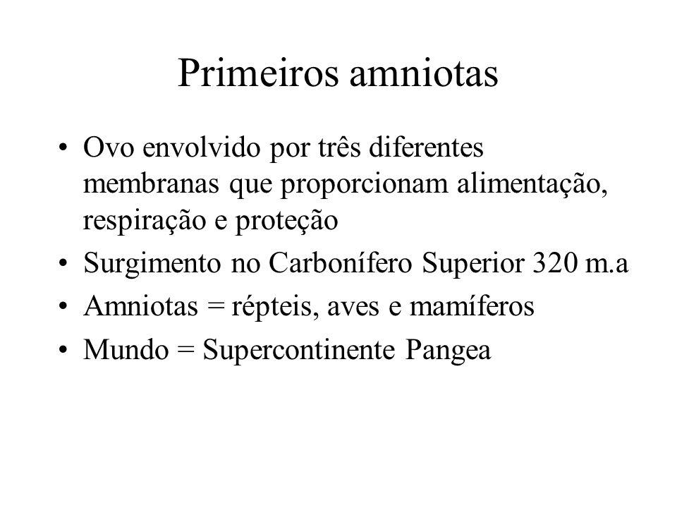 Os Amniotas surgiram no Carbonífero Médio (320 milhões de anos), quando os antigos continentes estavam se unindo para formar um continente único (Pangea)